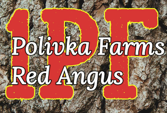 Logo image for Polivka Farms Red Angus